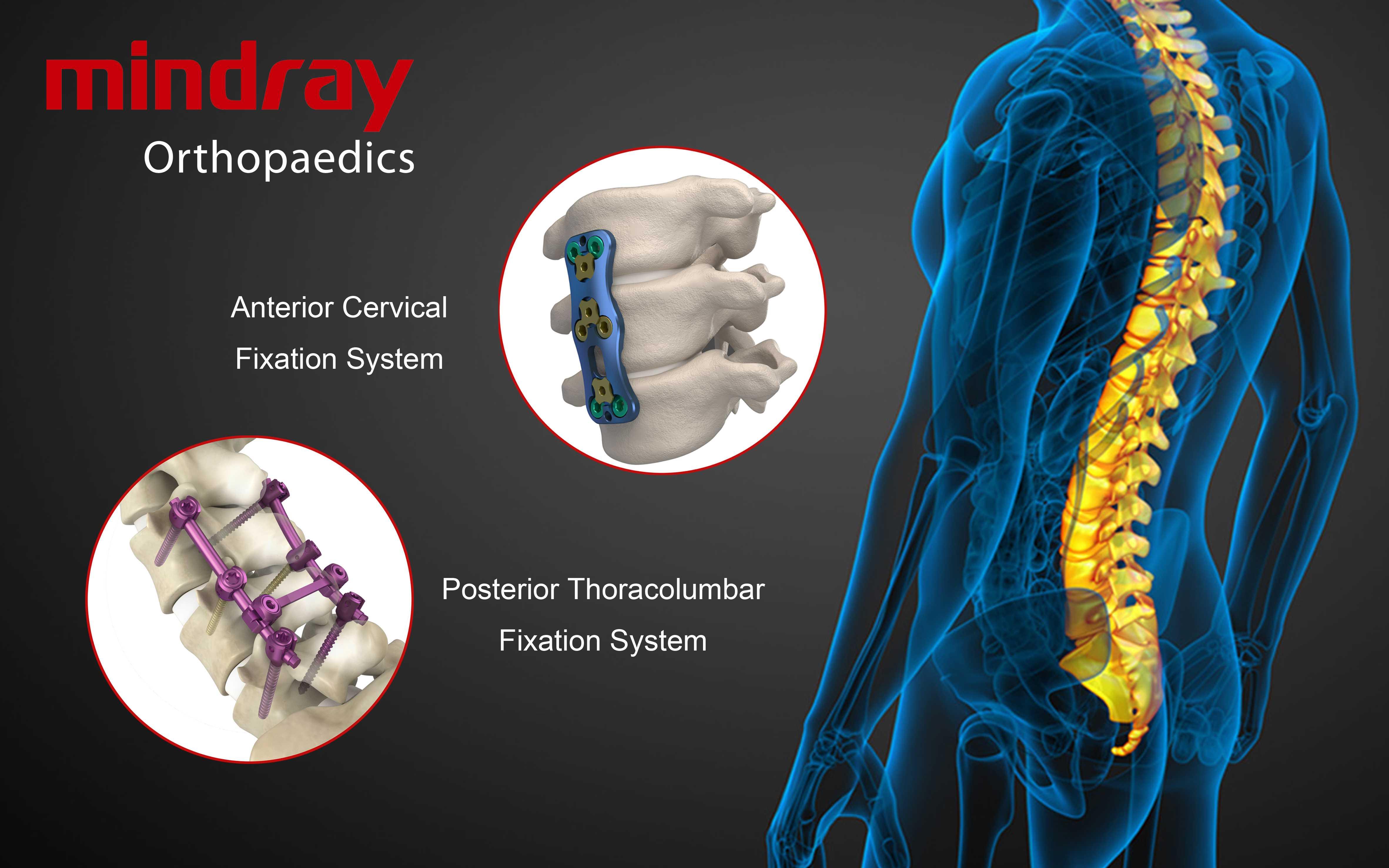 Spine脊柱
