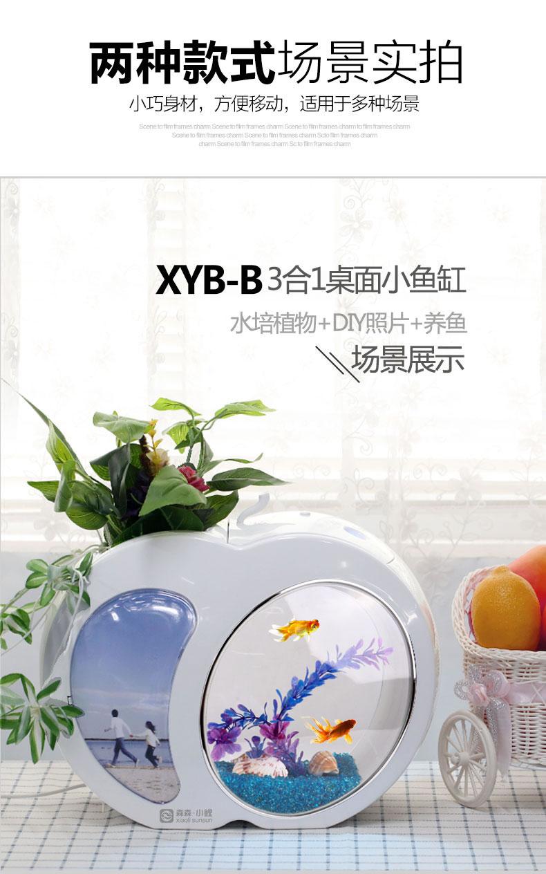 XYAXYB-2
